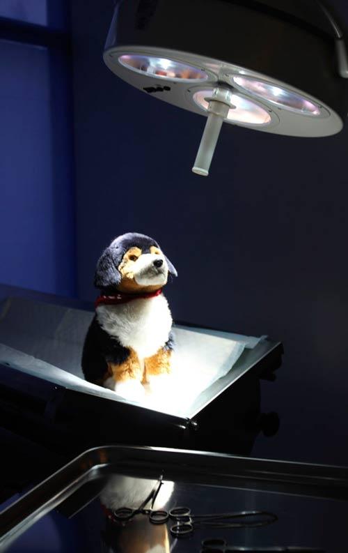Eläinlääkäritilojen kuvaus nettisivuja varten